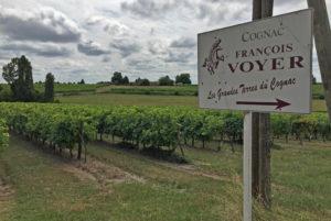 Voyage sur les terres du Cognac François Voyer