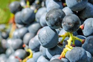 2 mai : atelier vins «À la découverte des cépages»