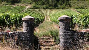 """27 novembre : atelier vins """"Spécial Bourgogne"""""""